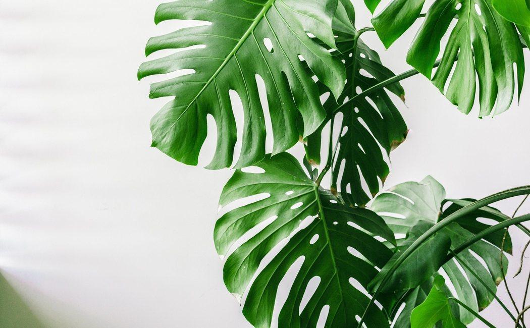 5 consejos para cuidar tus plantas de interior