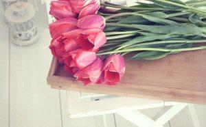 8 Plantas De Interior Con Flor Bekia Hogar - Plantas-interior-con-flor