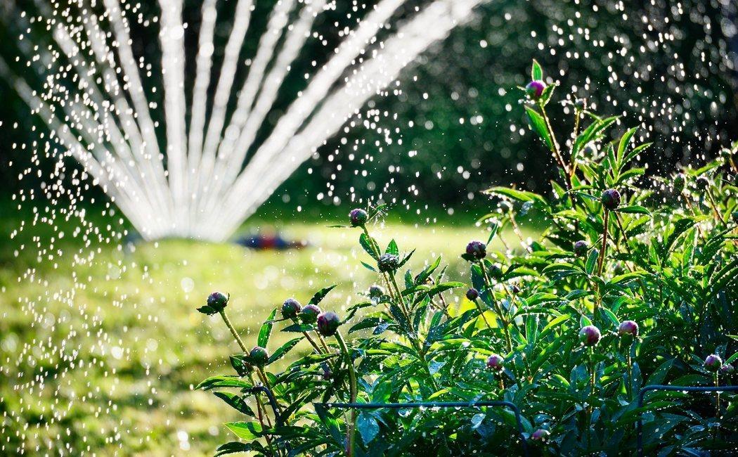 Cómo regar las plantas en verano si te vas de vacaciones