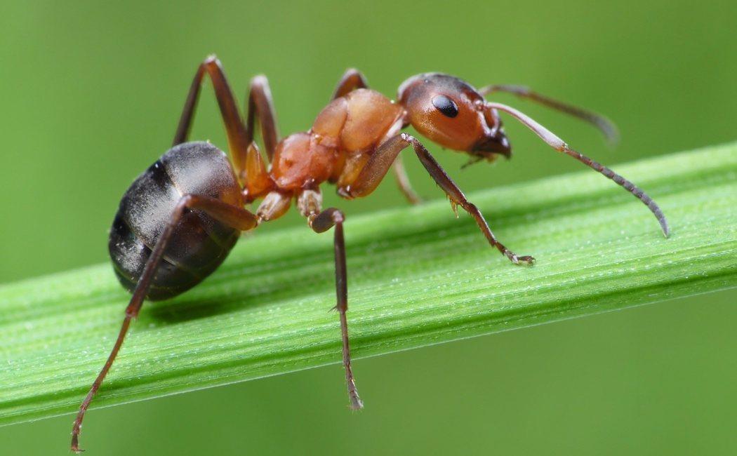 Cómo acabar con las hormigas