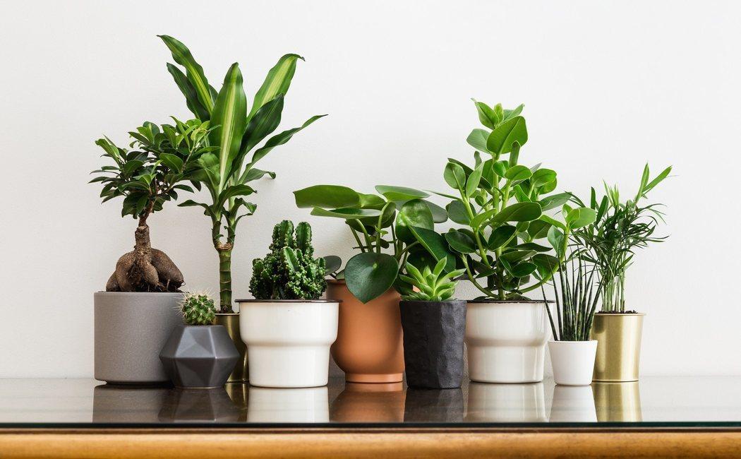 Plantas básicas para principiantes