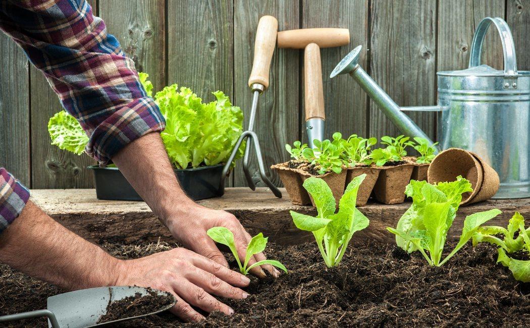 Cómo hacer una mesa de cultivo