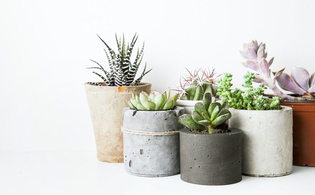Plantas que suben el ánimo