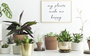 Cómo Decorar Con Plantas Artificiales Bekia Hogar