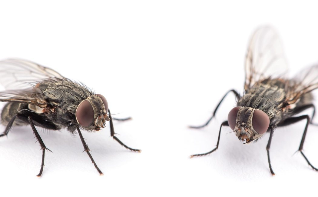 Cómo ahuyentar a las moscas con el número 58