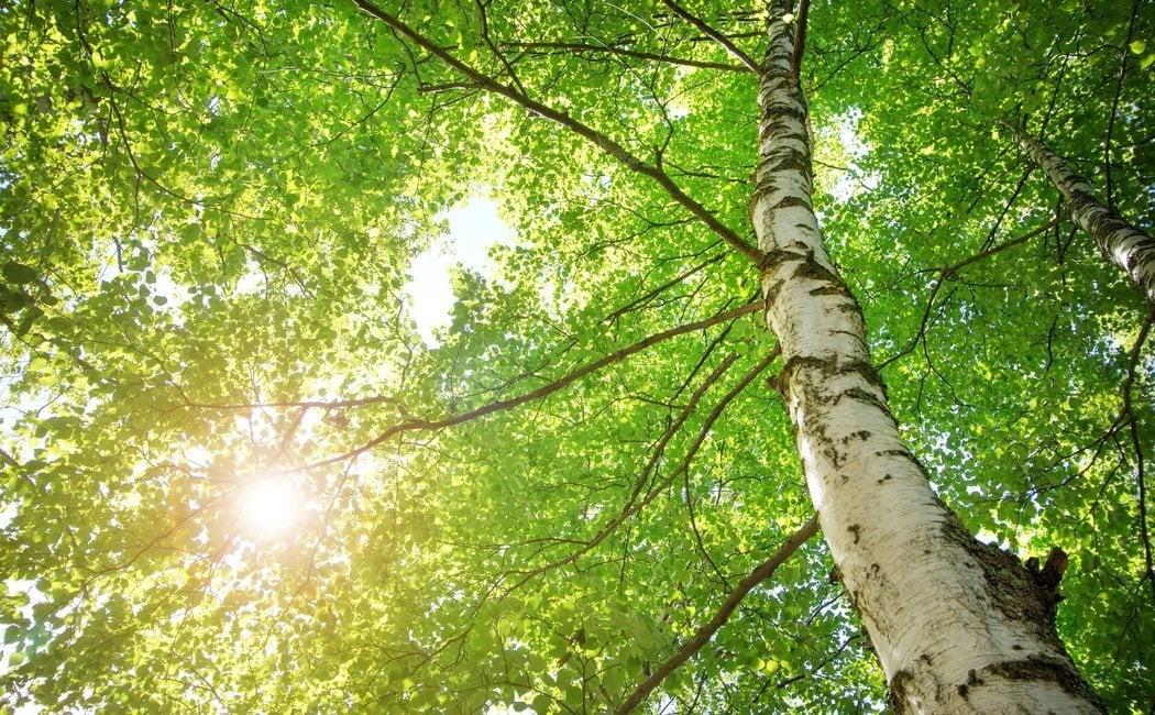 Cómo quitar un árbol de raíz