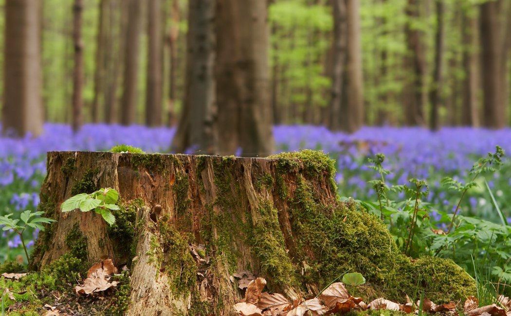 Cómo quitar el tocón de un árbol