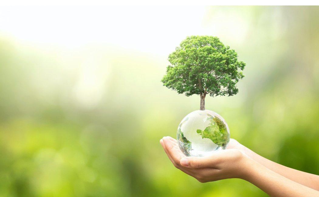 Qué es la ecología