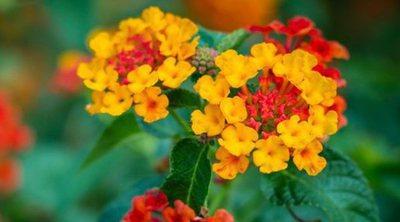 6 plantas tapizantes para tu jardín