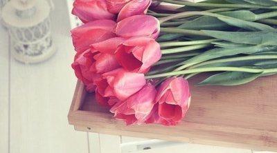 8 plantas de interior con flor