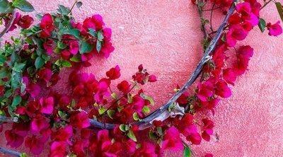 Plantas trepadoras para adornar el jardín