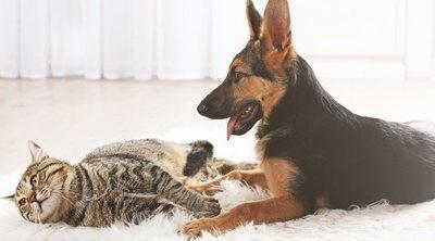 Crea un entorno seguro para animales domésticos