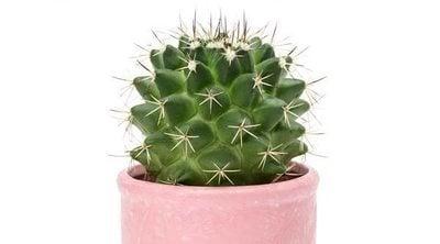 Curiosidades de los cactus