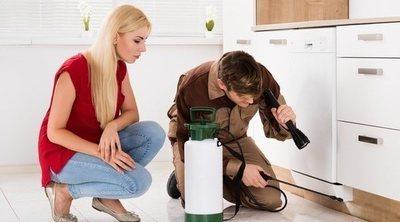 Cómo saber si tu madera tiene termitas
