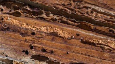 Cómo detectar si tu madera tiene carcoma