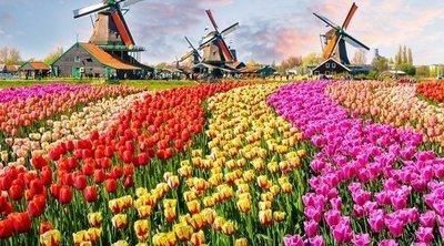 Tulipanes: todo sobre esta planta