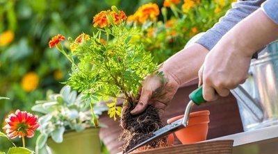 Cómo acondicionar el jardín en primavera