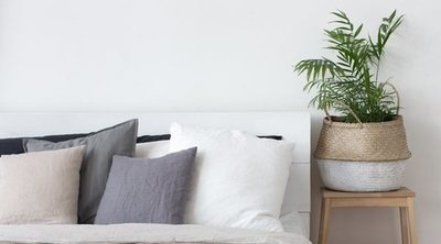 Las mejores plantas para el dormitorio