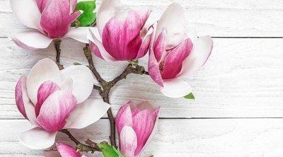 Todo sobre los magnolios