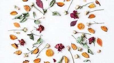 Plantas de otoño