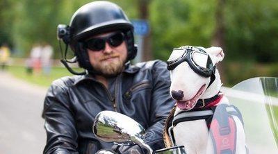 ¿Puede viajar mi perro en la moto?