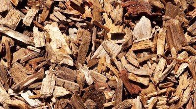 Ventajas de utilizar la corteza de pino