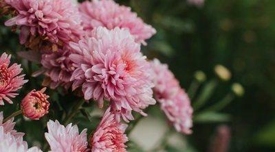10 plantas de exterior resistentes a las heladas